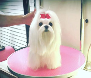 Cute Doggie with Bow   Best Dog Products