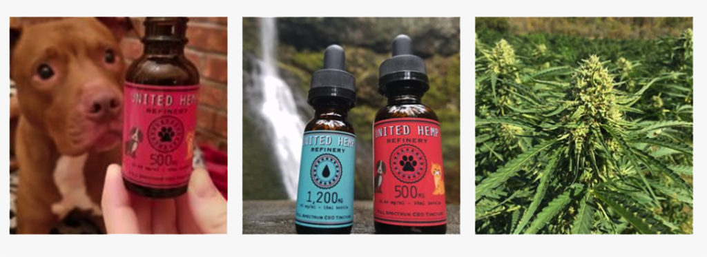 Cannabis Therapy Health Products