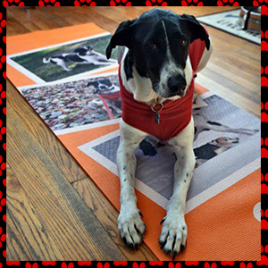 Customized Yoga Mats for Dog Lovers