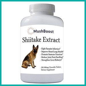 Shiitake Extract by MushBoost