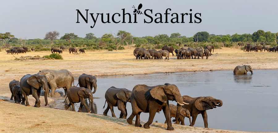 Nyuchi Safaris | Adventure Travel Affiliate Programs